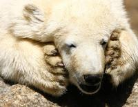 Urso polar Knut, no Zoológico de Berlim. 07/07/2011 REUTERS/Tobias Schwarz