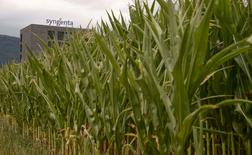 Corn grows on a field in front of a plant of Swiss agrochemicals maker Syngenta in the nortern Swiss town of Stein July 23, 2015. Syngenta and unwanted suitor Monsanto squabbled over an earnings report from the Swiss pesticides maker on Thursday, with both sides claiming it strengthened their case in a $45 billion takeover battle.            REUTERS/Arnd Wiegmann  - RTX1LIX0