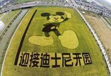 An aerial view shows rice plants in the shape of Mickey Mouse on a paddy field to celebrate the Shanghai Disney Resort which will be opened in 2016, in Shanghai, China, October 24, 2015. REUTERS/China Daily