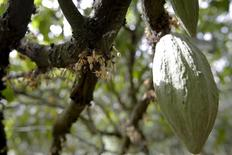 Una vaina de cacao en una plantación en Soubre, Costa de Marfil, ene 29, 2016. Los futuros del cacao se debilitaron el martes, cayendo por debajo de máximos en dos meses, tras la llegada de las esperadas lluvias a Costa de Marfil, aunque muchos operadores seguían esperando una significativa reducción tanto en la calidad como en la cantidad de la cosecha de mitad de año.   REUTERS/Thierry Gouegnon