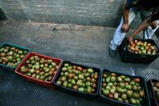 """Imagen de archivo de un trabajador ordenando tomates en la granja """"Las Gemelas"""" en Zacoalco de Torres, México, feb 4, 2013. La inflación interanual de México se aceleró a un 2.87 por ciento hasta febrero, presionada sobre todo por incrementos en los precios de productos agropecuarios, mostraron el miércoles cifras oficiales.    REUTERS/Alejandro Acosta"""