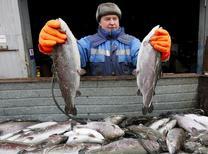 Рабочий на частной рыбоферме на реке Енисей. Россия в 2016 году снизит импорт рыбы примерно на десять процентов, передают российские агентства со слов замминистра сельского хозяйства РФ, руководителя Росрыболовства Ильи Шестакова. REUTERS/Ilya Naymushin