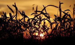 Поле пшеницы, принадлежащее предприятию Солгонское, в селе Солгон Красноярского края. 6 сентября 2014 года. Урожай зерновых в России в этом году составит 100-105 миллионов тонн, сказал глава Росгидромета Александр Фролов. REUTERS/Ilya Naymushin/Files
