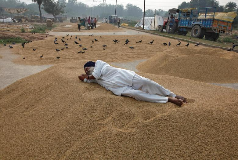 A farmer rests on a heap of harvested rice crop at a wholesale grain market in Chandigarh, India, October 4, 2016. REUTERS/Ajay Verma