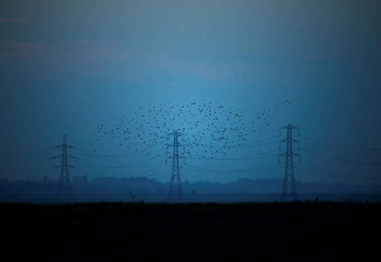 Migrating starlings fly at dusk past electricity pylons silhouetted by the sunset of a clear autumn evening in the Kent countryside,  in Graveney, Britain, October 26, 2015.    REUTERS/Dylan Martinez/File Photo