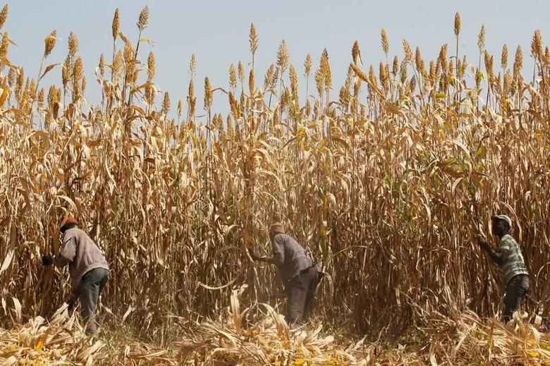 Men work on a farm in a village on the outskirt of Zaria in Nigeria's northern state of Kaduna November 15, 2016. REUTERS/Akintunde Akinleye/Files