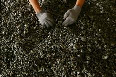 Un trabajador muestra níquel en una fundición de ferroníquel propiedad de la minera estatal Aneka Tambang Tbk en el distrito de Pomala, Indonesia. 30 de marzo 2011. Indonesia introdujo el jueves nuevas reglas que permitirán las exportaciones de mineral de níquel, bauxita y concentrados de otros minerales bajo ciertas condiciones, en un cambio radical de política para el importante productor mundial.  REUTERS/Yusuf Ahmad/File Photo - RTX2R6JY