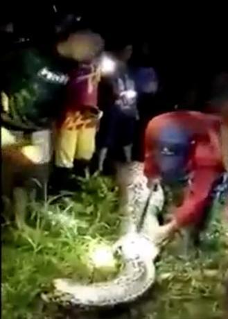 3月30日、インドネシアのスラウェシ島の村マムジュで、仕事でヤシ農園に出かけた26歳の男性が1日以上帰らず、家族や住民が行方を捜したところ、体長7メートルのニシキヘビの中から遺体で発見されるという出来事があった。写真は提供された26日撮影のビデオから(2017年 ロイター/Courtesy of Andi Fathir)