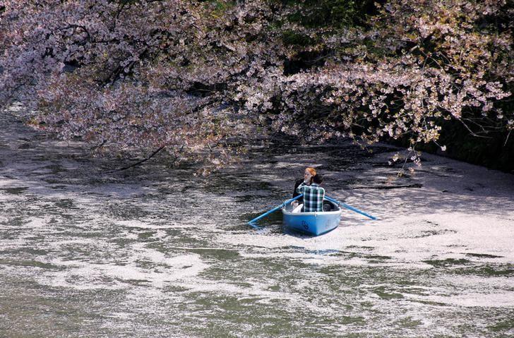 2017年4月13日,日本东京,游客在樱花树下泛舟。REUTERS/Toru Hanai