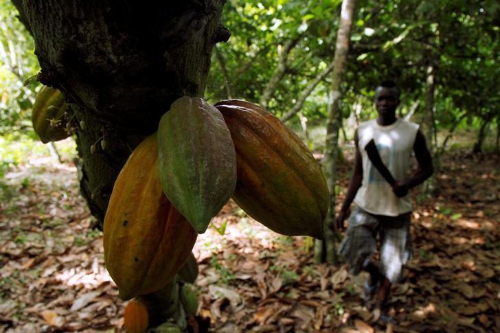 FILE PHOTO: A farmer prepares to cut cocoa pods at a cocoa farm in Agboville, Ivory Coast April 24, 2017. REUTERS/Luc Gnago