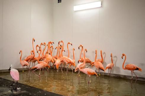 Miami zoo shelters animals