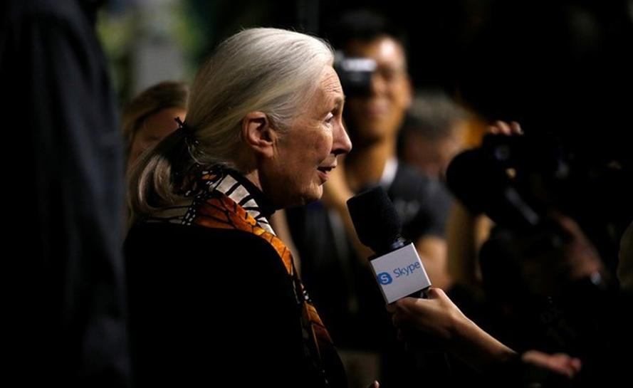Jane Goodall urges U.S. Senate to halt quest for Arctic refuge oil