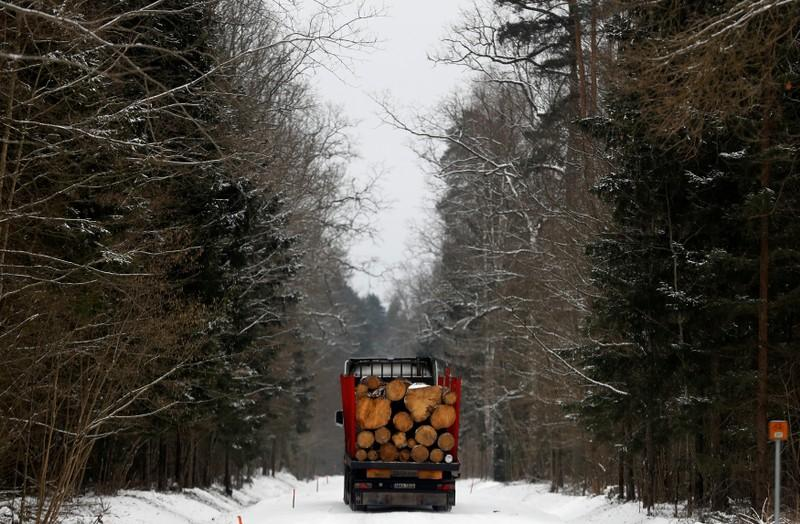 Poland calls for planting more forests worldwide to improve carbon capture