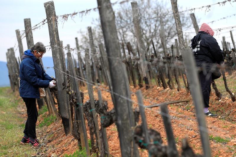 At $40,000 a bottle, Tokaj winemaker aims to revive royal heritage