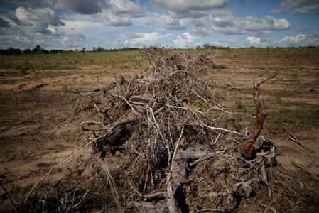Cargill says food industry will miss zero deforestation goal