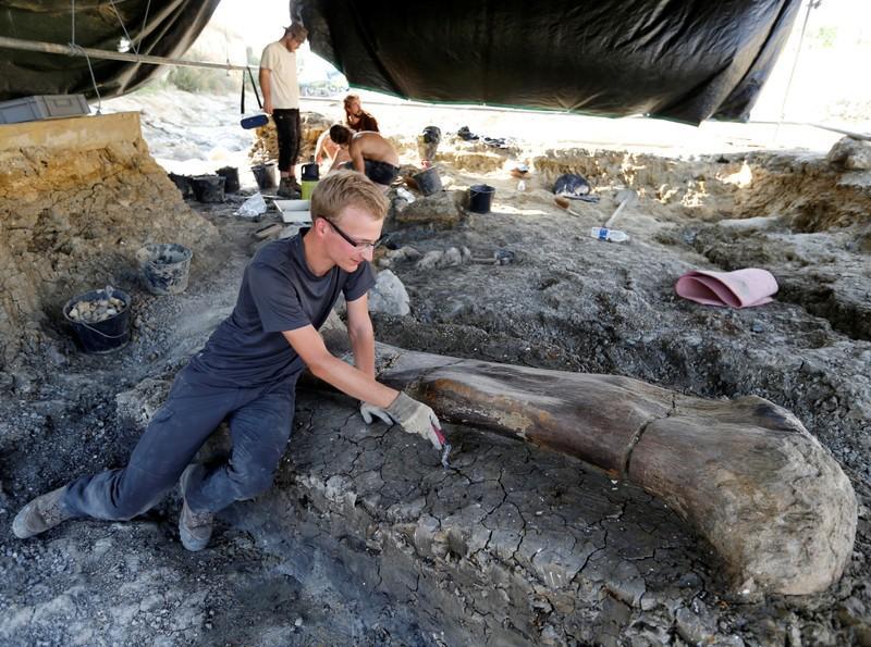 Reuse dinosourusbeen wat in die suidweste van Frankryk gevind word
