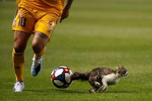 When animals interrupt sports