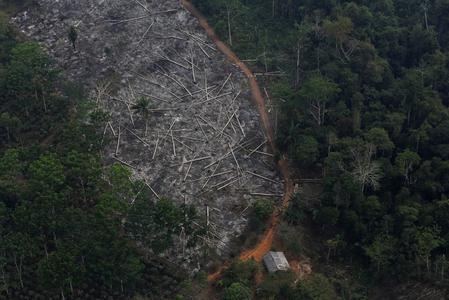Brazil deforestation climbs 67% through July as government attacks data