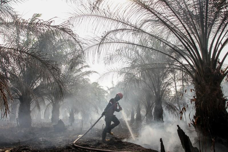 Indonesia could take back 1.4 million hectares of land from palm...