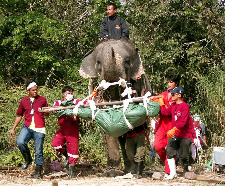 Un elefante lleva el cuerpo de una víctima del tsunami después de descubrirlo en el distrito de Takuapa, Tailandia, 2 de enero de 2005. REUTERS / Sompaht Meepan