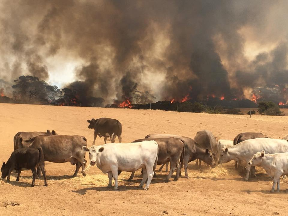 'A long way to go': Australians flee as heat, winds fan huge bushfires