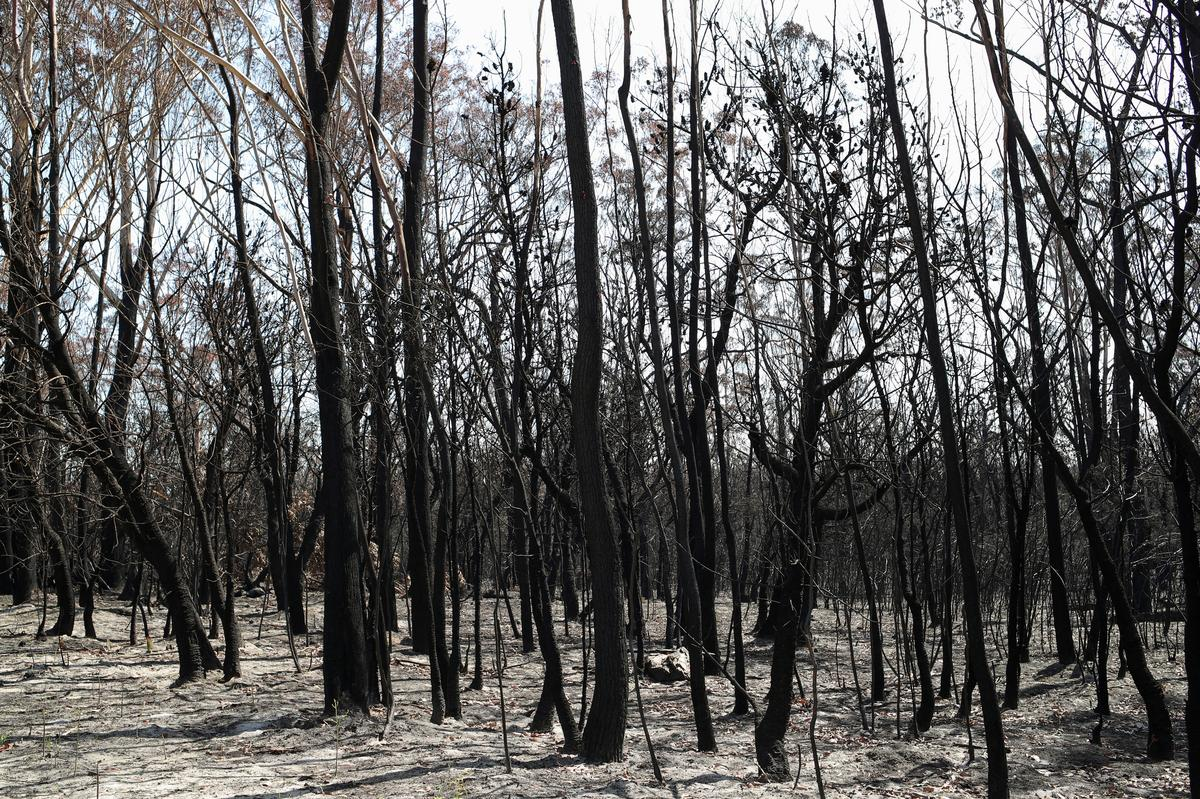 CO2 concentration set for biggest annual rise, fueled by Australian bushfires