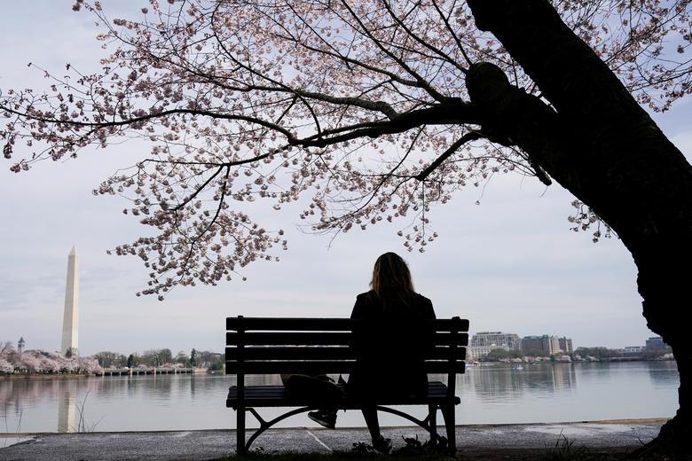 Женщина сидит под цветущими вишневыми деревьями в Вашингтоне, 19 марта 2020 года. РЕЙТЕР / Джошуа Робертс