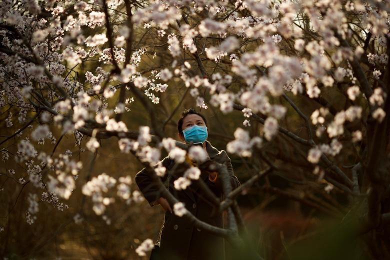 Женщина в защитной маске смотрит на цветы в парке в солнечный день в Пекине, Китай, 21 марта 2020 года. РЕЙТЕР / Томас Питер