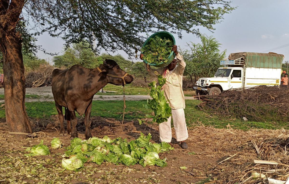Coronavirus upends global food supply chains in latest economic shock
