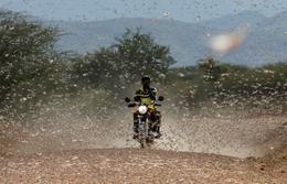 Swarms of locusts devastate parts of northern Kenya