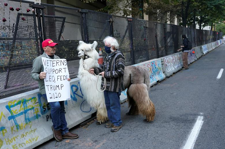 "Caesar McCool and his handler Larry McCool talk to a supporter of President Donald Trump at the site of ongoing protests in Portland. The six-year-old ""No Drama Llama"" has become a fixture in the city, extending his wooly neck to nuzzle both Black Lives Matter activists and law enforcement officers in body armor lining up to take selfies with him.  REUTERS/Nathan Howard"