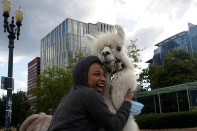 'No Drama Llama' offers comfort at Portland anti-racism protests