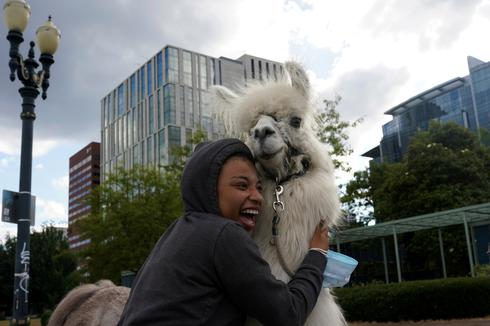 'No Drama Llama' offers comfort at Portland anti-racism protests