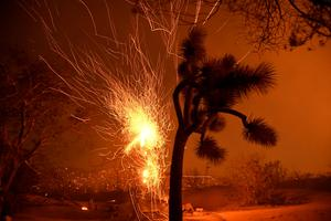 Winds drive California's 'Bobcat' fire