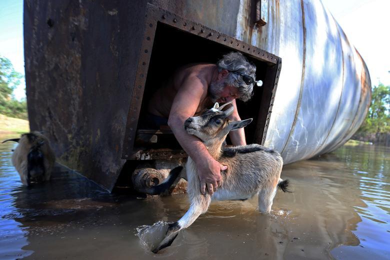 Brian Schexnayder keçisini Louisiana, Iowa'daki Delta Kasırgası'ndan sonra çiftliğindeki hasarlı bir silodan kurtarır.  & nbsp; REUTERS / Jonathan Bachman & nbsp;  & nbsp;
