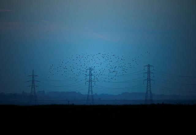 FILE PHOTO: Migrating starlings fly at dusk past electricity pylons silhouetted by the sunset of a clear autumn evening in the Kent countryside,  in Graveney, Britain, October 26, 2015.    REUTERS/Dylan Martinez/File Photo